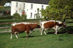 Lough Bishop House