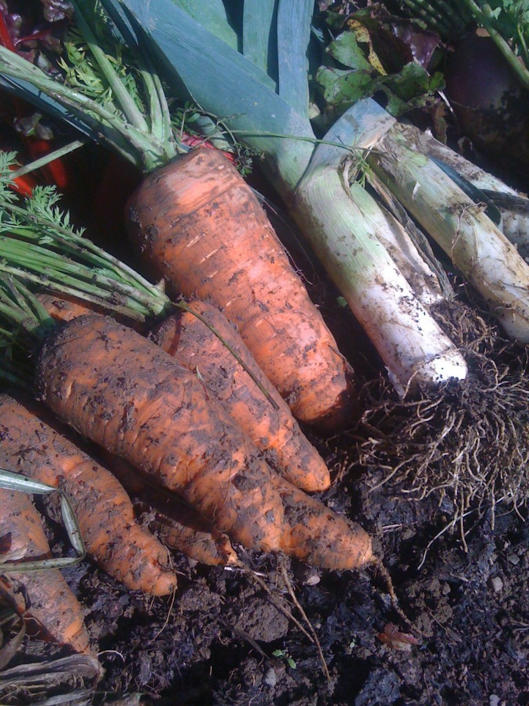 Carrots_Leeks